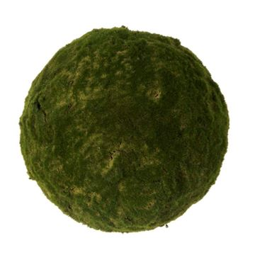 Picture of Moss ball