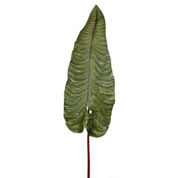 Picture of Alocasia Decorative Flower