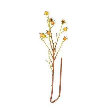 Resim Çiçek Kuşburnu Dekoratif Çiçek