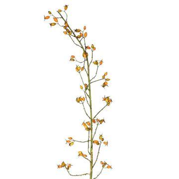 Resim Kuşburnu Dekoratif Çiçek