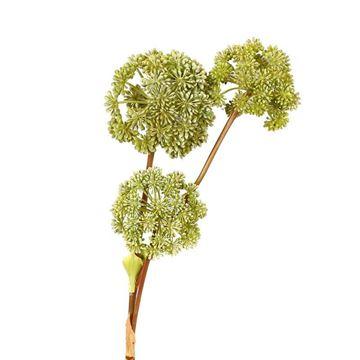 Resim Melek Otu Dekoratif Çiçek