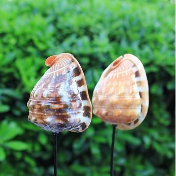 Resim Deniz Kabuğu Dekoratif Obje